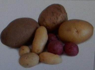 Potato Tips & Info.