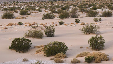 Photo: Typical desert vegetation near Mesquite Flat Sand Dunes, including creosote bush and mesquite