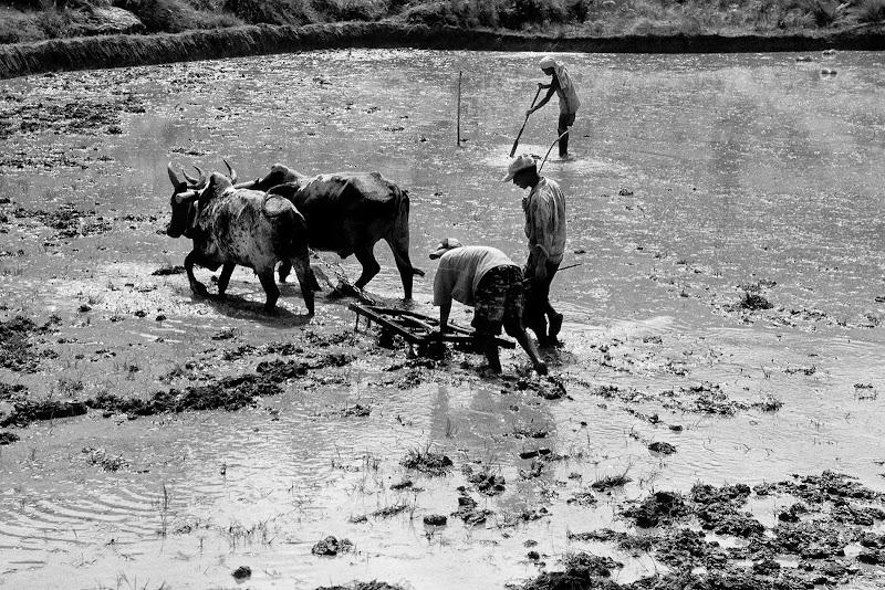 Antica agricoltura rurale di Alexx70