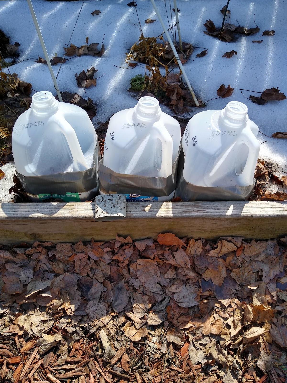 winter sowing in milk jugs