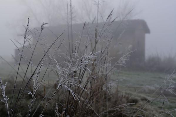 Una mattina di gennaio di paolo_battilani