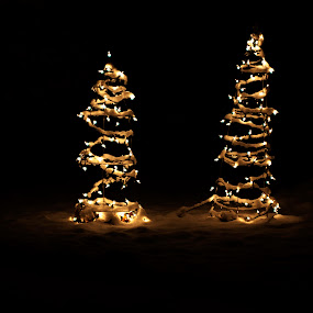 Lights in the snow by Aimee Hultzapple - Public Holidays Christmas ( lights, tree, snow, christmas )