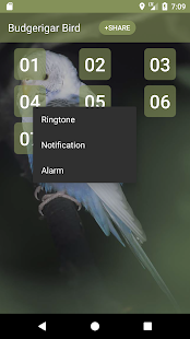 Budgerigar Bird Sounds - náhled