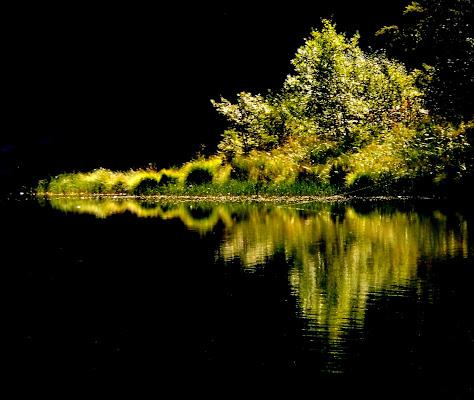 albero di luce di provenza