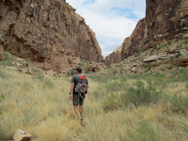 Grassy canyon bottom