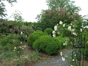 Photo: The Rose Garden at Barrington Hall