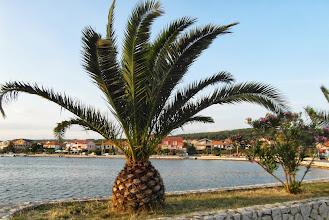Photo: Tu rosły trochę inne palmy