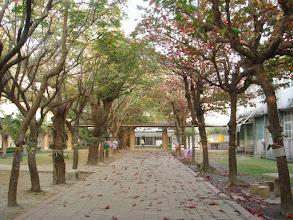 Photo: 大葉欖仁步道