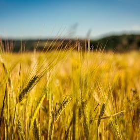 .. by Lubomir Gobs - Landscapes Prairies, Meadows & Fields ( sky, grass, 35mm, d5000, summer, east, nikon, slovakia, sun )
