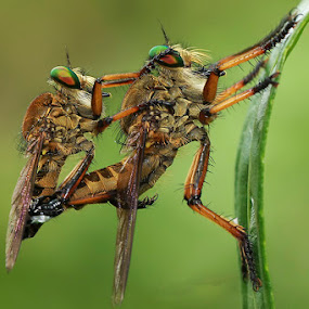 landed by Bobby Worotikan - Animals Insects & Spiders ( animal insect macro )