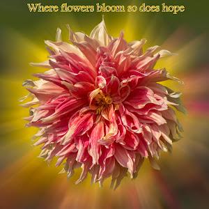 FLOWER_43_2017 [_DSC7010]_3a.jpg