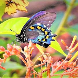 Butterfly art by Mary Gallo - Digital Art Animals ( butterfly art, nature, butterfly, nature up close, nature photography, digital art,  )