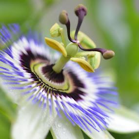 by Kris Van den Bossche - Flowers Single Flower (  )
