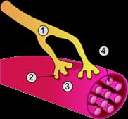 40--Synapse_diag3