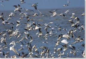 36-oiseaux
