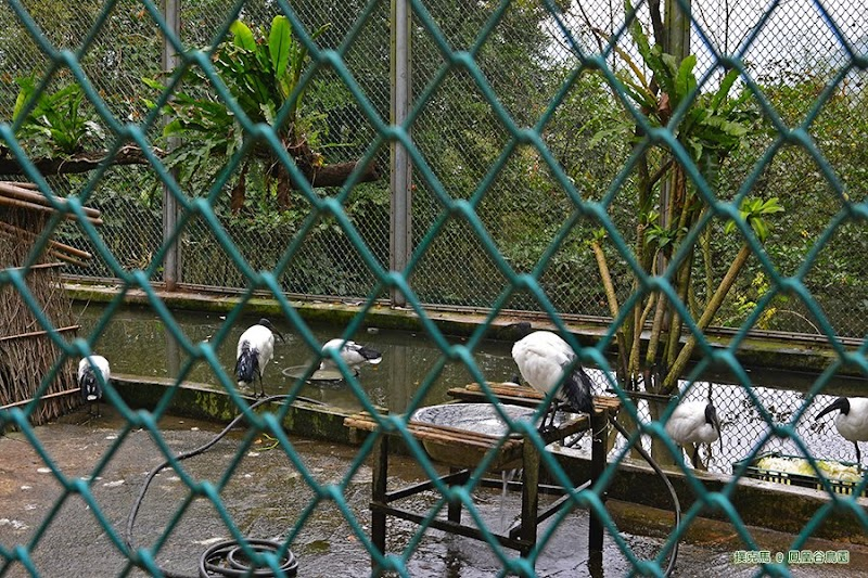 鳳凰谷鳥園生態園區水禽園