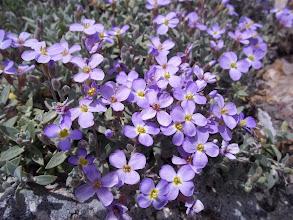 Photo: Kaya arasında biten harika çiçekler.