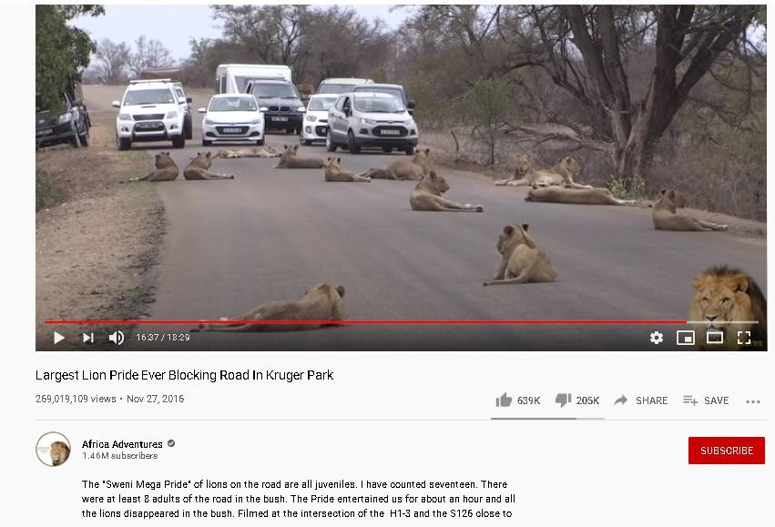 Lion Gujarat youtube.jpg