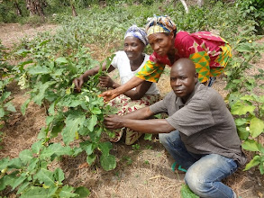Photo: Submitted by Siera Vercillo  Showing off progress on a garden through the Agriculture As A Business program under the SATISFY project with World Vision Sierra Leone.
