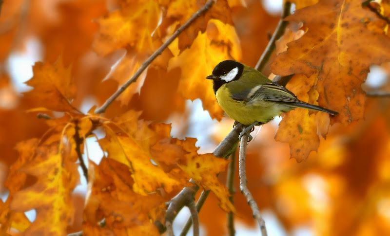 Nel bel mezzo dell'autunno di gigidueelle