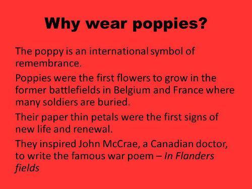 Why wear poppies_w500.jpg