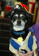 Photo: Stitch, the pirate  for costume contest