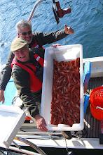Photo: The Morning's Shrimp Haul