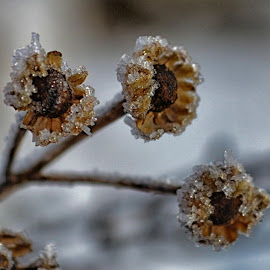by Donna Seymour - Nature Up Close Other plants