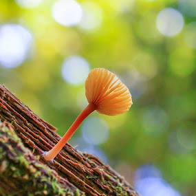 Tiny Mushroom by Jeff McVoy - Nature Up Close Mushrooms & Fungi ( mushroom, wood, moss, tiny mushroom, glow, log,  )