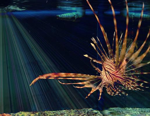 Uno Scorpione nell'Acquario di marisa_serafini
