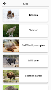 Mammals – Learn All Animals in Foto-Quiz! 4