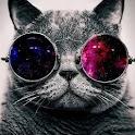 ニャー!猫の音 icon
