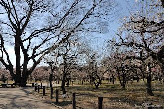 Photo: 毎年恒例だった梅木の展示即売会と、(2014,03,12)