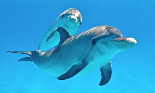 Dolphins Live Wallpaper  screenshots 6