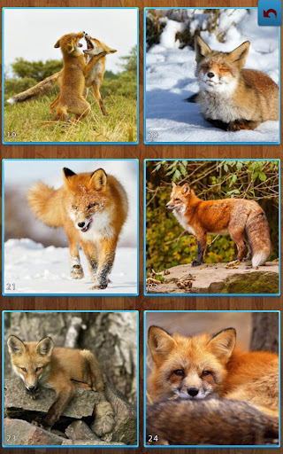 Fox Jigsaw Puzzles 1.8.5 APK MOD screenshots 2