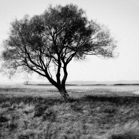 Alone... by Daniel Gaudin - Landscapes Prairies, Meadows & Fields ( field, nature, tree, black and white, prairie,  )