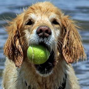 by Kari Schoen - Animals - Dogs Portraits (  )