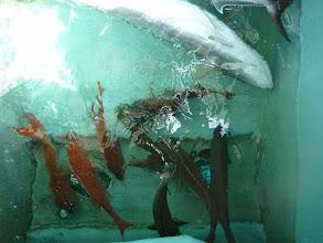 Photo: 釣果です。 戸田さんの釣果