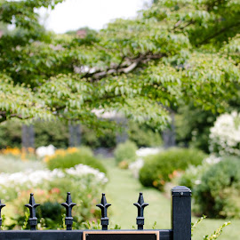 City garden by Michele Williams - City,  Street & Park  City Parks ( fence, park, nature, color, town, flowers, city park, garden )