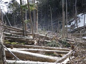 倒木で金網が下敷きに