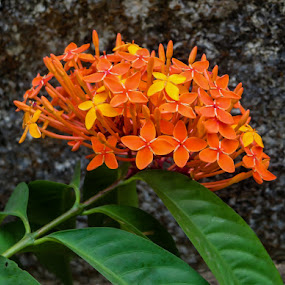 Cluster by Rahul Manoj - Novices Only Flowers & Plants ( orange, green, yellow, flowers, wall )