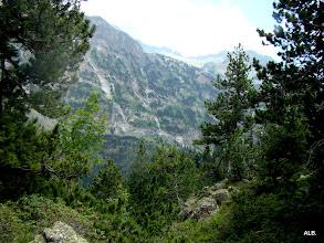Photo: Los pinos negros del valle.