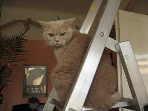 Photo: Es sind oft die einfachsten Dinge, die unseren Katzen Spaß machen.....Sarah liebt Leitern :-)