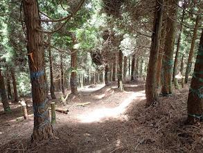 植林帯の急斜面を下る