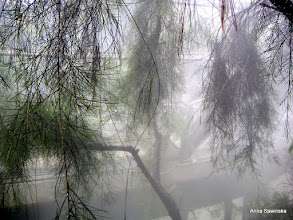 Photo: Botanic Garden