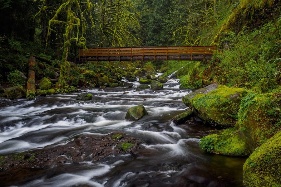 Columbia Gorge Stream by Andrew Baek - Landscapes Waterscapes ( water, stream, nature, landscape, olympus, river,  )