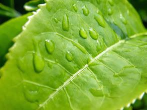 Photo: Tea leaves...