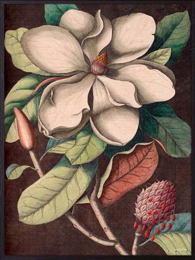 White magnolia poster 50x70