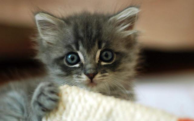Kitty Maker