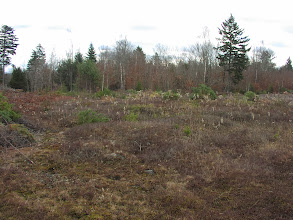 Photo: We were running out of time, so we cut this area without doing the clean up -- we'll come back in a few weeks and drag it all to the burn piles.